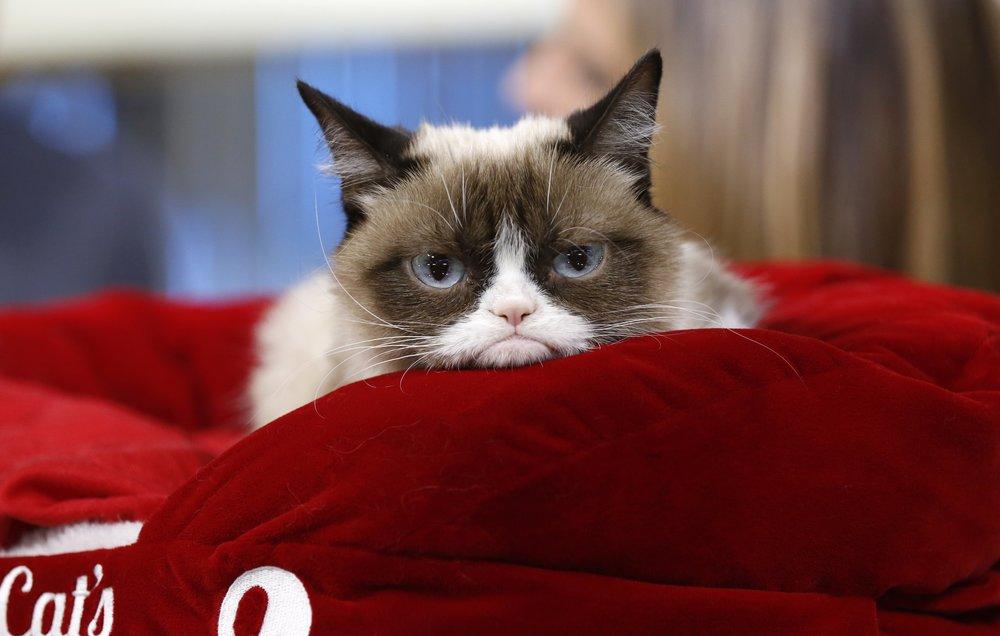 Social Media S Meme Celebrity Grumpy Cat Wins 710 000